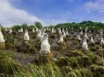 El área de islas Diego Ramírez ofrece espacios ideales para la conservación de aves que llegan a nidificar, como también pingüinos penacho amarillo y macaroni.