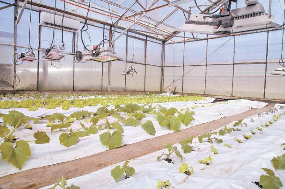 Sistema de producción hortícola en ambiente controlado.
