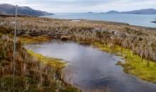 Mire-lagoon-hosting-Sphagnum-falcatulum-mosses-in-the-Herschel-Island-Cape-Horn-Archipelago-Region-of-Magallanes-768x568