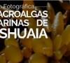 guia fotografica macroalgas portada tamaño boletin